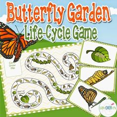 PRINTABLE Butterfly Life Cycle game from TPT