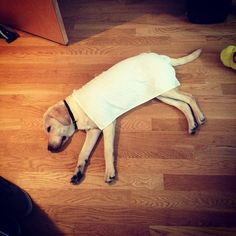 Tip for cooling your dog in summer heat: Use a wet towel as a blanket and settle in for a long, long nap.