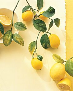 Lemons are as essential to everyday cooking as onions and garlic -- and even more versatile. Find 28 lemon recipes, as well as tips on selecting and storing the fruit. Lemon Yellow, Lemon Lime, Yellow Fruit, Honey Lemon, Yellow Flowers, Fruit Juice, Natural Air Freshener, In Natura, Still Life