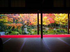 [4K]KYOTO JAPAN 京都の紅葉の名所(東山) Autumn Leaves in Kyoto Higashiyama Area 京都観...   autumn leaves Kiyomizu Temple, Kodai-ji, Eikan-do, En-kotera