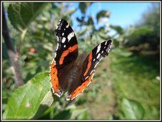 butterfly by MrsEfi on DeviantArt