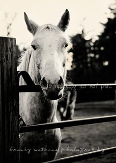 Black and White Horse 5x7 #photography art print by bwatkinsphoto, $12.00