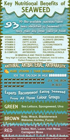 Nutritional Benefits of Seaweed Infographic - helps boost metabolism through the thyroid