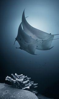 Blue Deep Kites @Andrey Narchuk