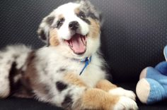 Cute Overload: 10 Smiling Pups to Perk Up Your Day via Brit + Co.