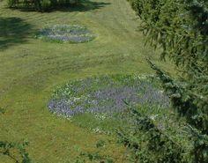 Naturnaher Garten: Wer auf die Perversion von Wiese, genannt Rasen, aus Gründen des persönlichen Egoismus nicht verzichten will, kann ja wenigstens eine Wiesen-Insel stehen lassen ;-)