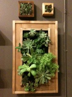 Framed succulents for your walls. Interior or exterior.
