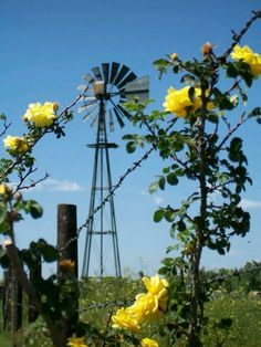Windmill, Barbed Wire Fence & Yellow Rose's I really want a windmill and wild yellow rose bush. Not so much on the barbed wire Country Farm, Country Life, Country Living, Country Roads, Farm Windmill, Old Windmills, Wind Of Change, Old Farm Equipment, Country Scenes
