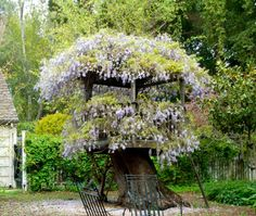 amazing tree fort built on an old tree stump, covered in wisteria