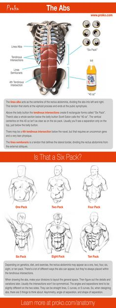 Here's a useful infographic to help you learn about the abs. For a full drawing course on human anatomy for artists visit proko.com/anatomy