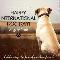 Happy National Dog Day! via www.Facebook.com/PositivityToolbox