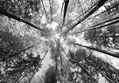 Papier peint panoramique : Arbres