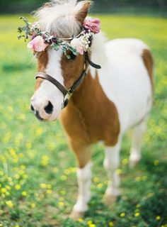 how cute is this mini-horse with trendy floral crown?