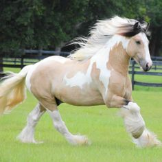 beautiful stallion