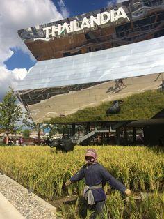Thai Pavilion @Expo2015Milano #ThaiRice #Thailand #Landofsmile #LandofRice