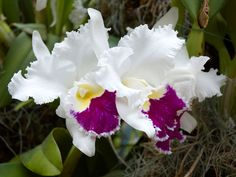 orchids #orchids