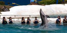 I was most surprised to hear that Mexico City has just banned Dolphinariums.  Or more specifically, they have banned dolphins being used for public spectacle, entertainment, therapy sessions, scientific investigation, training and education. Head of the Environmental Commission, Xavier López Adame,