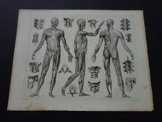 1849 antique anatomy print  original old by DecorativePrints