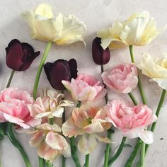 Rose Like Flowers, Contemporary Ceramics, Dahl, Color Palettes, Vintage Art, Tulips, Floral Wreath, Wreaths, Tattoo
