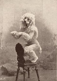 Charles Lauri as 'The French Poodle', The Sketch Magazine, 15th March 1893. Museum no. 131655. © Victoria and Albert Museum, London