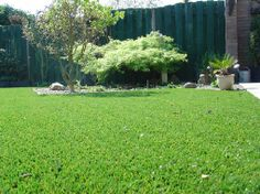 Gardenplaza - Hübscher Kunstrasen macht Schluss mit kahlen Stellen, Pfützen und Co - Zuverlässig zur grünen Dauer-Power