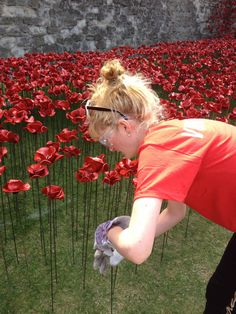 "Hannah Kokoschka planting poppies at the Tower of London August 2014 as part of Paul Cummins amazing installation ""Blood Swept Land and Seas of Red."""