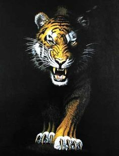 Stalking Tiger by Chris Hiett *