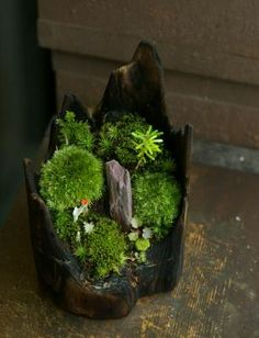 zen garden in tree stump