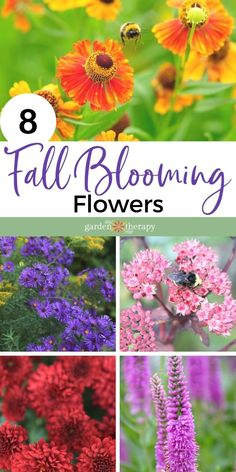 Fall-blooming flowers provide such a show in the garden for gardeners, but also are an essential food source for our winged friends, bees, and other pollinators. #gardentherapy #perennials #flowers #fall #fallgarden #fallflowers Fall Blooming Flowers, Fall Flowers, Fall Perennials, Autumn Garden, Garden Projects, Bees, Therapy, Friends, Plants