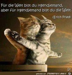 Lustige Tierbilder Katzen Kitten Lustiges Tier Witzige Bilder Spruche Niedliche Katzchen