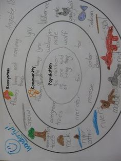 The Science Penguin: Teach It: Ecosystems and Food Chains Third Grade: Being part o a group helps animals obtain food defend themselves, and cope with changes. Groups may serve different functions and vary dramatically in size. Fourth Grade Science, Middle School Science, Elementary Science, Science Classroom, Teaching Science, Science Education, Gifted Education, Higher Education, Science Resources