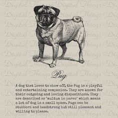 Vintage Pug Dogs Puppy Description Definition Printable Digital Download for Iron on Transfer DIY to Totes Pillows Tea Towels DT987