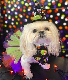 Bella Model, Dogs, Animals, Fashion, Moda, Animales, Animaux, Fashion Styles, Pet Dogs