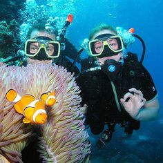 If youre looking for a Great Barrier Reef excursion like no other then you should talk to our friends at Quick Silver Series.  Were not clowning around but dont just take our word for it.  Not scuba certified and want to dive on the Great Barrier Reef no worries mate!  Try an introductory dive with Quick Silver!  #traveldue #australia #quicksilvergroup #silversonic #greatbarrierreef #snorkeling #scubadiving #adventure #friendsofdue #toptoursaus by downunderendeavours http://ift.tt/1UokkV2