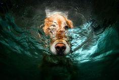 » Fotografías de perros bajo el agua por Seth Casteel