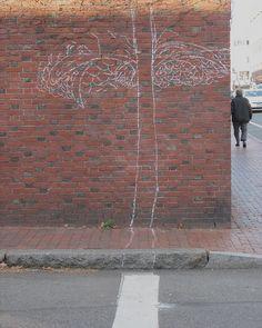 Winter bloom, Harvard Square