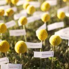 9 creative nature-inspired ideas for your escort cards! (via Botanical Floral Designs)