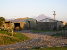 The milking and implement sheds at Stent Road, Warea, in the early evening. Mount Egmont is in the background.