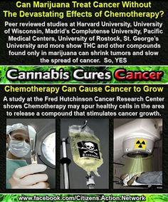 hemp oil cures cancer | join our board --> #1Cure4Cancer | www.mycutcorep.com/JamesTaylor