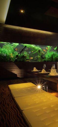 Aquarium Architecture, Tropical Fish Tanks, Discus Fish, Nano Tank, Thai Restaurant, Custom Aquariums, Color Splash, Fresh Water, Design