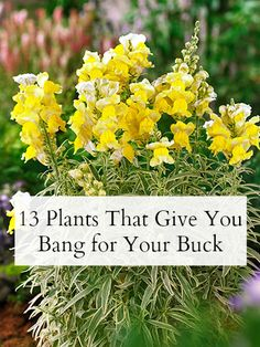 New to #gardening? Start with these easy-care (and inexpensive!) plants.