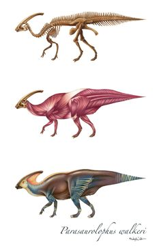 Parasaurolophus Reconstruction by MaryIllustrations on Etsy, $25.00