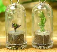 Japanese keychain plants - Susan Mernit's Blog