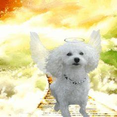 heaven wings | Heaven | Wings