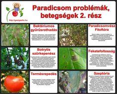 Vegetables, Water, Gardening, Outdoor, House, Yard, Ideas, Gripe Water, Outdoors