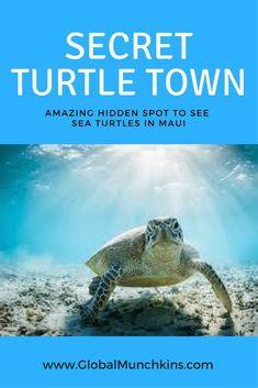 I've discovered a Hidden Gem, [the Secret, No Snorkel] Turtle Town Maui Secret spot to see sea turtles- Turtle Town Maui Hawaii Maui, Lahaina Maui, Maui Beach, Visit Hawaii, Kahului Maui, Best Beaches In Maui, Kaanapali Maui, Hawaii Life, Honeymoon Vacations