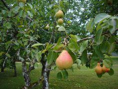 Les Amandiers orchard.