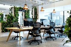 Open plan office with nature! #openplanoffice cubicles.com lights