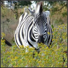 Moreleta Nature Reserve, Pretoria, South-Africa
