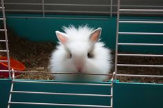 Well hello there fluffykins!   I would love to have another bunny someday.